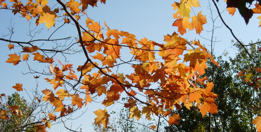 Autumn leaves against the sky