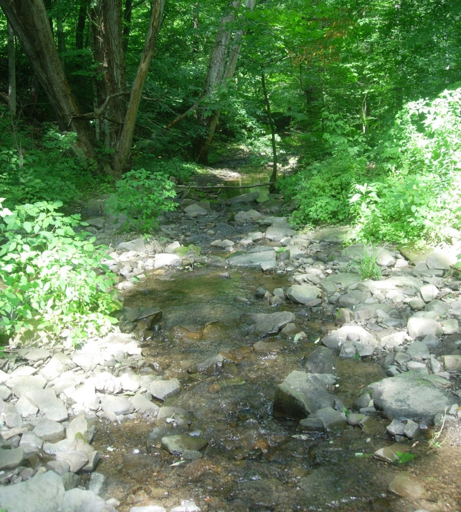 Photo of stream among trees, by the author