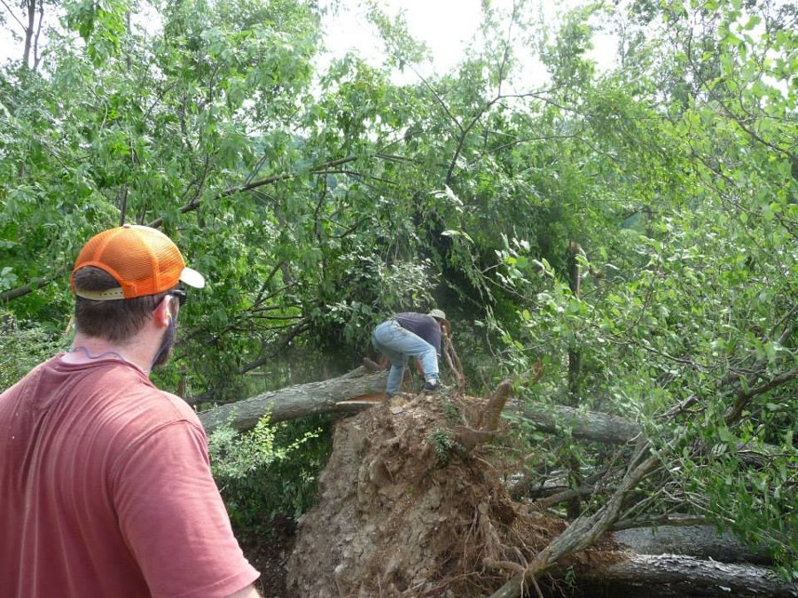 Rundy sawing a downed tree