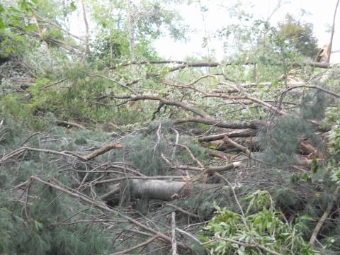 Many trees down